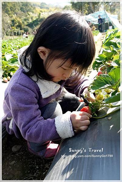 9耀婆山草莓園 (15).JPG