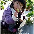 9耀婆山草莓園 (16).JPG