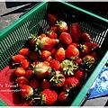 9耀婆山草莓園 (17).JPG