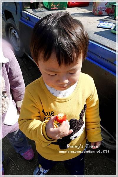 9耀婆山草莓園 (20).JPG