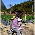 9耀婆山草莓園 (23).JPG