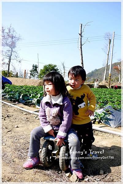 9耀婆山草莓園 (24).JPG