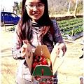 9耀婆山草莓園 (25).JPG
