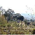 9耀婆山草莓園 (29).JPG