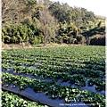 9耀婆山草莓園 (30).JPG