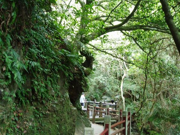 往第二層瀑布的步道.JPG