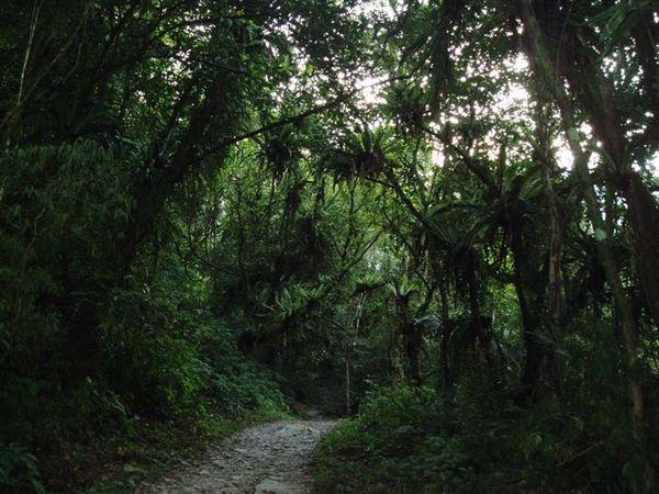 松蘿步道1.JPG