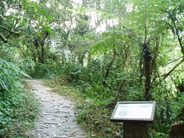 松蘿步道2.JPG