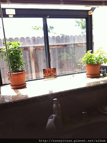 廚房窗檯的花