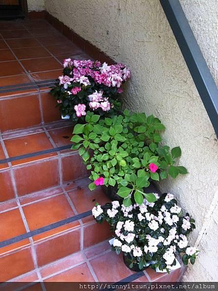 門廊上的花