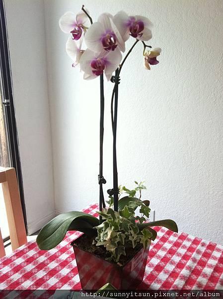 餐桌上的蘭花