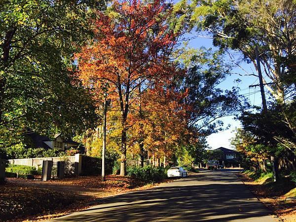 2017 sydney autumn 4