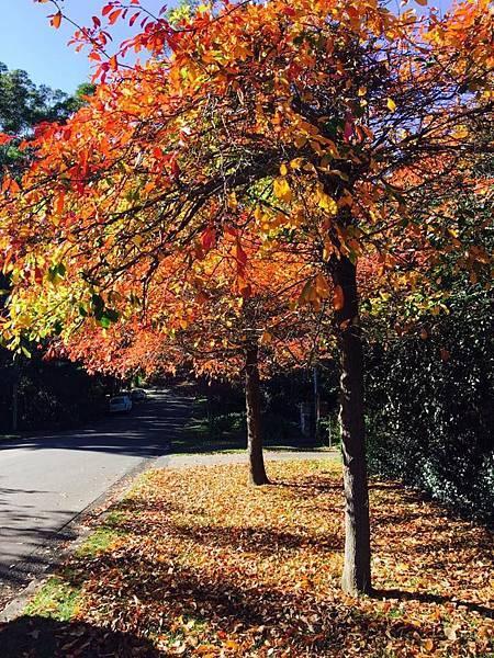 2017 sydney autumn 2