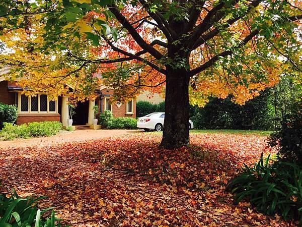 sydney autumn 9