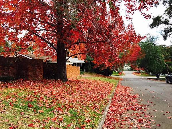 sydney autumn 12