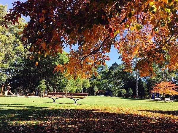sydney autumn 6