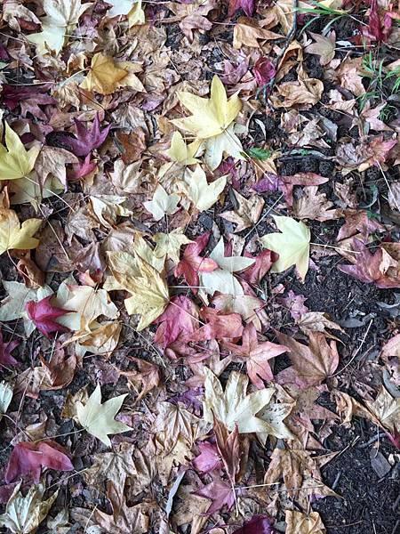 sydney autumn 8