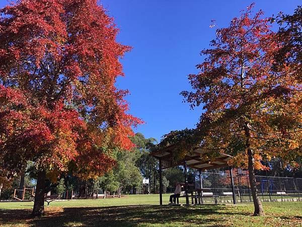 sydney autumn 5