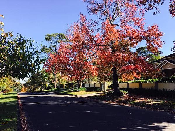 sydney autumn 15