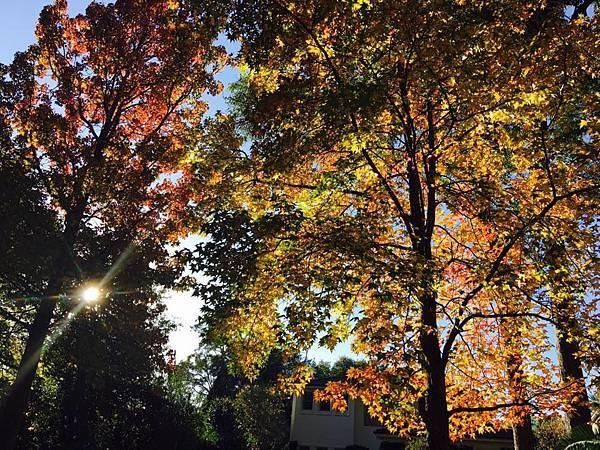 sydney autumn 14