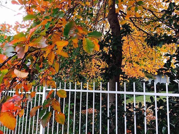 sydney autumn 19