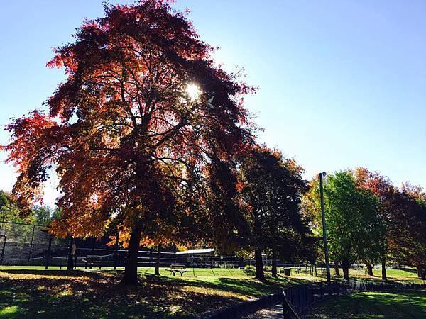 sydney autumn 16