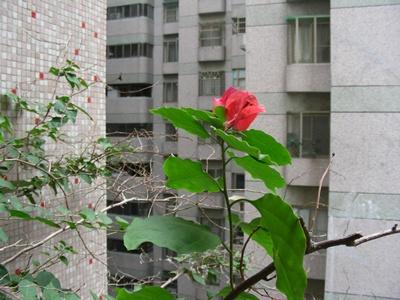 縮小照片DSCN0975.JPG