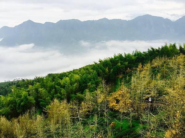 銀杏森林 步道 (1)_調整大小.JPG