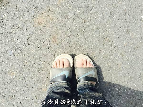 嘉義_太保_花海節 活動期間1.22~1 (49).jpeg