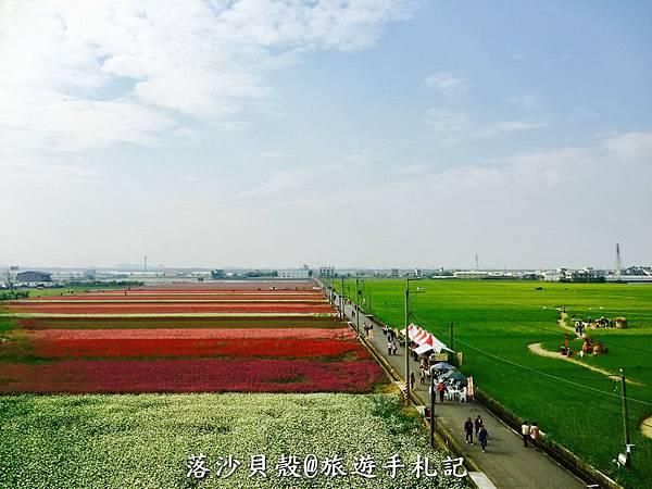 漸層式的地毯花海 (20).jpeg