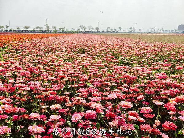漸層式的地毯花海 (18).jpeg
