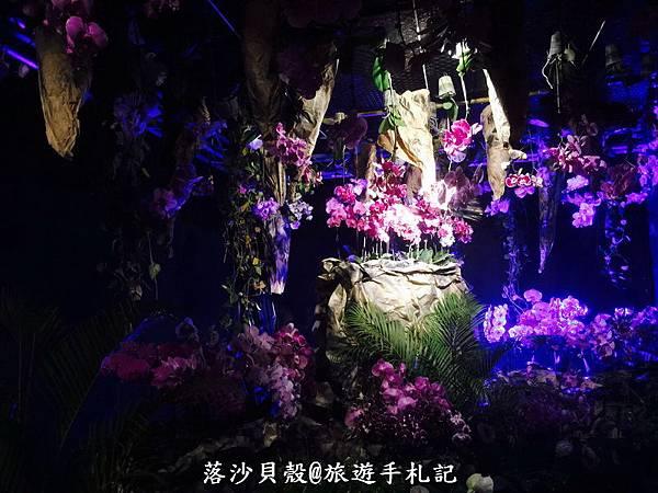 台南_後壁_2017台灣國際蘭花展 (109).jpg