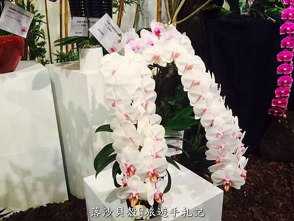 台南_後壁_2017台灣國際蘭花展 (172).jpg
