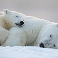cute-baby-polar-bear-day-photography-35__880.jpg