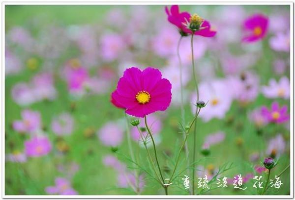 DSC_5205.jpg
