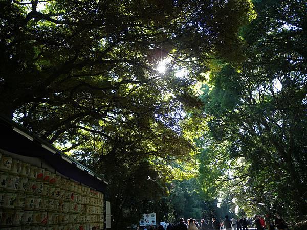 明治神宮的陽光