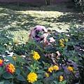 Boopee看花