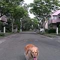 Boopee社區散步