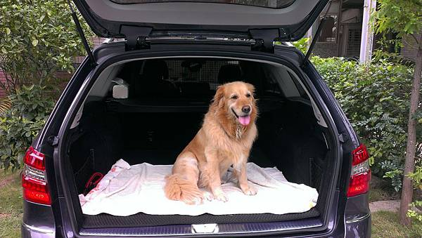 Boopee與車