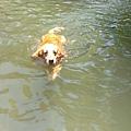 Boopee愛游泳