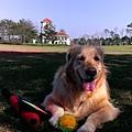 Boopee愛玩球