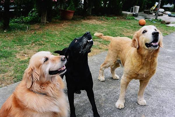 三個好朋友