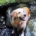 玩溪水好歡樂