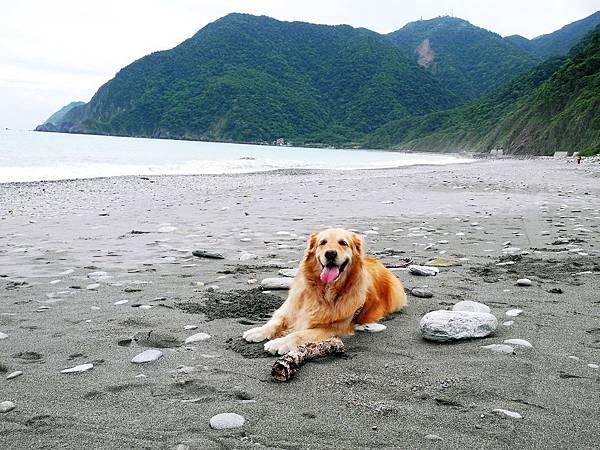 阿狗在海邊.JPG