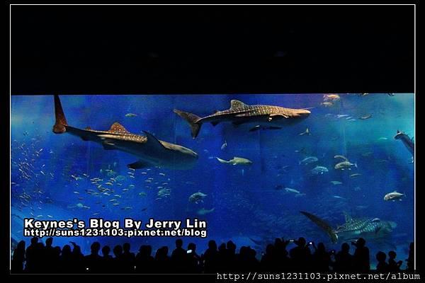 20130406沖繩沖繩美海水族館 (8)