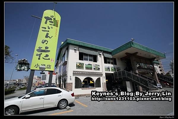 20140404沖繩大根之花大根花小祿店(だいこんの花) (11)