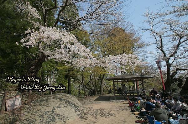 20170430盛岡城跡公園(岩手公園) (1).JPG