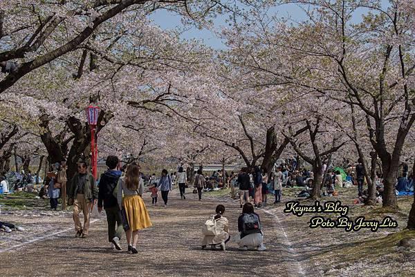 20170430盛岡城跡公園(岩手公園) (7).JPG