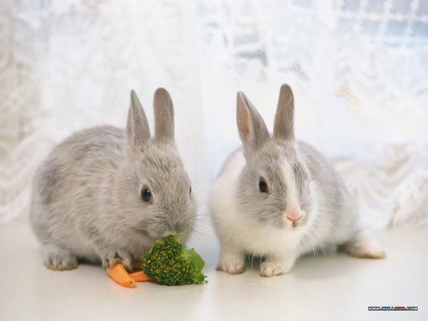 兔子1.jpg