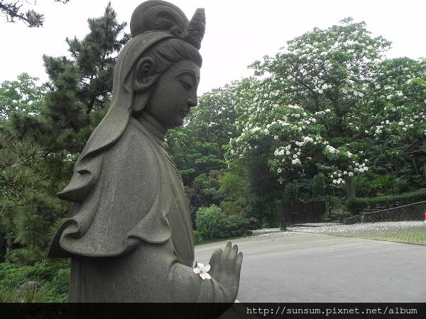 桐花飄 楓葉紅2013